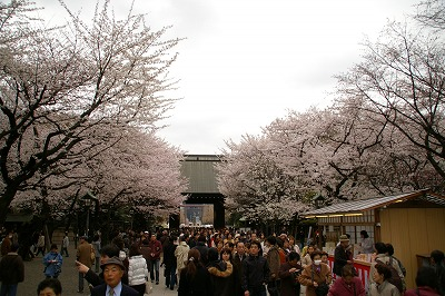 yasu001.jpg